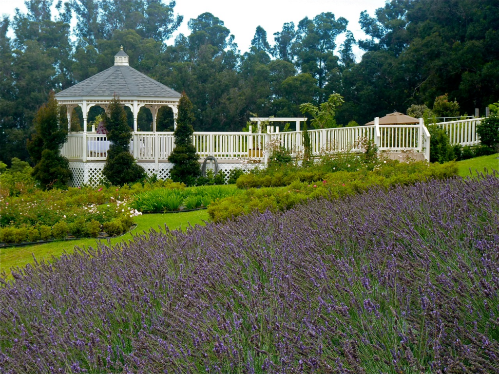 Summit Lavender Sojourn Tour