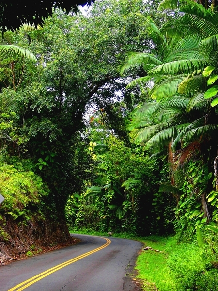 Road to Hana Tour in Maui