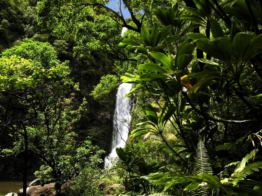 Almost more flowing waterfalls than you can count await you on the Road to Hana.